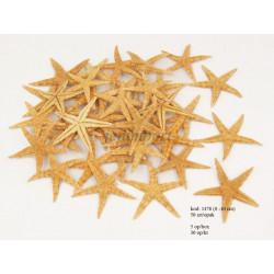 Jūros žvaigždės 8 - 10 cm,...