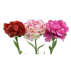Dirbtinė gėlė GVAZDIKAI